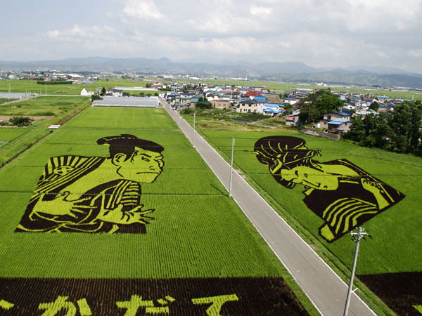 Rice_field_art